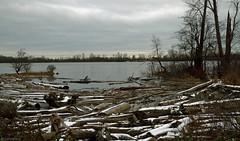 Fraser River - IMG_3770a2a2c (Sue Coastal Observer) Tags: fraserriver richmond dykeroad bc britishcolumbia canada winter driftwood