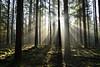 Eclat de lumière dans les bois (Croc'odile67) Tags: nikon d3300 sigma contemporary 18200dcoshsmc paysage landscape forets forest arbres trees vosgesdunord