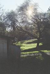silence in sunlight / (luustra) Tags: expired film cano ft ql kodak gold 200