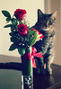 18th Anniversary (D()MENICK) Tags: cat roses red aaw active assignment weekly