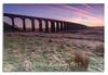 Ribblehead Viaduct (Steven Peachey) Tags: landscape sunrise canon stevenpeachey lee09gnd ef1740mmf4l canon6d ribblheadviaduct uk