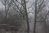 winter is escape (Mindaugas Buivydas) Tags: lietuva lithuania color winter december snow blizzard snowstorm mood moody forest tree trees birch sadnature nemunasdeltaregionalpark nemunodeltosregioninisparkas šilininkai mindaugasbuivydas dark darkness darkforest favoriteplaces memelland portraitofthetree