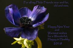 Happy New Year 2018 (Deborah S-C -In The Fairy Garden! On/Off) Tags: december2017 flower floral anemone beautifulblue darkblue sapphireblue cobalt green foliage stem anthers filaments pollen navy black