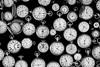 HAPPY 2018!!! (Light Echoes) Tags: sony a6000 50mm 2017 summer august springfieldantiqueshowfleamarket antique fleamarket timepiece pocketwatch watch time ticktock bw blackandwhite monochrome