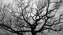 The tree before Christmas (irgendwiejuna) Tags: tree caffenol ilford rollei rollei35 delta3200 selfdeveloped blackandwhite winter berlin ilfordfilm