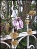 Mülheim - Bürgerstraße (abudulla.saheem) Tags: powerless kraftlos flower blume autumn fall herbst fence zaun bürgerstrase mülheim ruhrpott ruhrarea ruhrgebiet nrw germany deutschland samsung galaxy s4 abudullasaheem