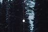 (arinanaana) Tags: evening trees forest light art nature landscape пейзаж природа лес деревья вечер фонар свет