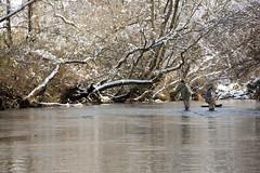 North Georgia Snow & Fly Fishing (DitchGyrl) Tags: 2017 cartecay danny ellijay fishing flyfish jason river snow december winter