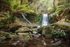 Amazing Horseshoe Falls || TASMANIA || AUSTRALIA (rhyspope) Tags: australia aussie tas tasmania horseshoe falls creek stream waterfall river forest woods rainforest mount mt field green rhys pope rhyspope canon 5d mkii tassie