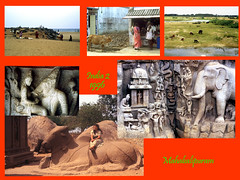 India2 (Barbara Coluzzi) Tags: 1996 mahabalipuran tamillnadu india beach stand cow eveninglandscape buffalo goat varaha mandapam descentofganges rathagroup bullback sculptedbull ancient
