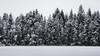 The Wall (MattiBo) Tags: snow winter finland forest freezing cold scandinavia ice landscape nature outdoor nikon lake suomi sunrise sunset jyväskylä beautiful blue maisema landscapes trees tranquil tree