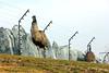 IMG_3163_copy (sinanaydin.net) Tags: eskişehir park hayvanat bahçesi zoo sazova animal