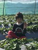 20180101_Pick up the strawberries. (violin6918) Tags: violin6918 taiwan hsinchu apple iphoto7plus i7 mobile strawberries cute lovely littlebaby angel children child pretty princess baby portrait kid daughter girl family vina
