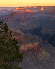 Grand Canyon Tree (RyanLunaPhotography) Tags: 6d arizona california canon grandcanyon hiking nationalpark southwest yavapai camping desert landscape red rocks ngc