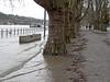 Hochwasser in Koblenz - Januar 2017 (onnola) Tags: koblenz rheinlandpfalz deutschland rhinelandpalatinate germany rhein rhine fluss river hochwasser überschwemmung flood weg strase uferweg riverside allee alley baum tree platane planetree platanus geländer railing bank bench