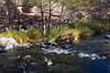 Water flowing (PierTom) Tags: sedona creek oakcreek