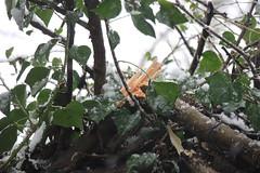 IMG_3453 (Jeff And) Tags: harrow greenhill bonnersfieldlane walk trees split branch
