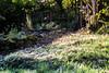 _DSC6187 (xav_roberts) Tags: nikon nikonv1 nikkor dof moss lichen nature funghi rust autumn wintersun moisture dew morningdew outdoor countryside rural plants nikkon1 nikkor32mm nikonft1 sigma105mmf28 sigma105mm sigma