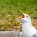 Finnland 2010 / Helsinki - Feeding the gulls