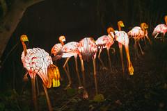 Wild Lights (Strangelove 1981) Tags: 2017 dublinzoo ireland wildlights zoo night lights glow light animals festival flamingo