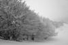 L'Aubrac l'hiver au col de Bonnecombe (Michel Seguret Thanks for 11,8 M views !!!) Tags: france nature natur natura massifcentral froid cold frio kalt saison season winter inverno invierno neige snow neve schnee michelseguret nikon d pro