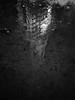 nagytemplom (LG_92) Tags: hungary békéscsaba church reflection water night upsidedown winter christmas blackandwhite bw blackwhite monochrome schwarzweiss noiretblanc noir tower 2017 december pool