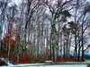 Schneestämme (almresi1) Tags: schnee snow winter wood wald forest bank nature landschaft landscape remshalden remstal buoch abend evening