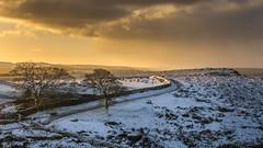 Curbar Gap Sunrise #2 (gavsidey) Tags: curbar edge derbyshire snow sheep trees walls skyline sunrise sunset ngc d7100 peak district moors photooftheday peakdistrict