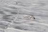 lines & curves (marianna_a.) Tags: footprints snow path grass lines curves winter landscape mariannaarmata