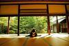Maiko_20171105_15_26 (Maiko & Geiko) Tags: seiraiin temple koume kyoto maiko 20171105 舞妓 西来院 小梅 京都 yoshiyukikomori