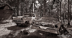 Two Old Friends Shootin' the Breeze (/ shadows and light) Tags: nearoakburn manitoba abandoned automobiles beaters cars clunkers countryside monochrome bw trixgrain old rustbuckets textures trees vehicles 1956ford 1957ford