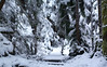 Snowy Forest (Kristian Francke) Tags: forest outdoors nature natural path hiking pentax bright bc canada sunshine winter flickr landscape