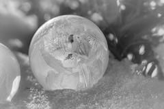 Frozen Bubble Magic (L E Dye) Tags: extensiontube20m frozenbubble minus29c 2017 alberta canada d5100 ledye macro nikon