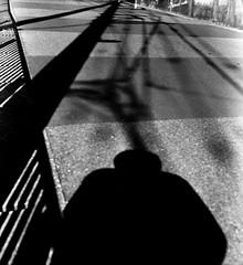網絡配置 (Network configuration) (Dinasty_Oomae) Tags: メオプタ フレクサレット フレクサレットiii meopta flexaret flexaretiii 白黒写真 白黒 monochrome blackandwhite blackwhite bw outdoor 千葉県 千葉 chiba 影 shadow 船橋市 船橋 funabashi