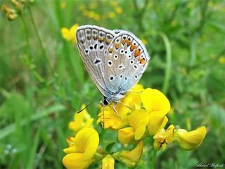 Butterfly 1548