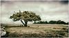 Baum_Steine_Himmel (m.artin k.) Tags: steingrab grossteingrab nobbin grab grave rügen insel baum steine felsen deutschland ostsee natur himmel