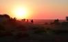 Sunset at The Thar Desert, Rajasthan.  India (Betty C.H.) Tags: camelsafari camels holidays india jaisalmer rajasthan samsanddunes thardesert travel vacation