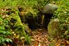 To the underworld (Thomas Roland) Tags: skov forest colour colourful autumn efterår october oktober frejlev gravhøj grav tomb neolithic grave dysse runddysse stendysse lolland