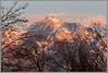 Salt Lake City Alpenglow (Photo-John) Tags: mountains slc alpenglow sunset utah landscape wasatch winter travel adventure wasatchmountains wasatchfront saltlakecity pink canon eos 7dmarkii 7dmkii outdoor outdoorphotography travelphotography stockphotography stockphoto editorialphotography saltlake