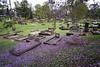 Toowong Cemetery (interestedbystandr) Tags: toowong cemetery jacaranda brisbane