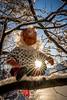 Merry Christmas to all my Flickr friends (Richard Larssen) Tags: richard richardlarssen rogaland norway norwegen norge larssen sony scandinavia sel1635gm a7riii santa sunstar snow winter