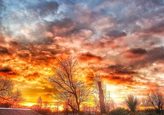 An orange sunrise, on Christmas Eve!😀🎄👍🎉 (LeanneHall3 :-)) Tags: sunrise sun sunshine skyscape sky clouds hull kingstonuponhull eastpark christmaseve trees branches landscape samsung galaxys7edge