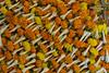Marché aux fleurs de Mullick Ghat, Calcutta, Bengale occidental, Inde (Pascale Jaquet & Olivier Noaillon) Tags: fleurs marchéauxfleurs détailmarchandises calcutta bengaleoccidental inde ind