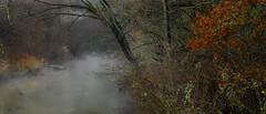 Semi Transparent (keith_shuley) Tags: fog foggy mist misty mistymorning creek stream trees forest colors colorful red orange bullcreek austin texas texashillcountry