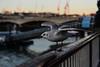 Dominant (PChamaeleoMH) Tags: birds blackheadedgulls centrallondon fauna gulls london southbank thames