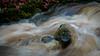 snow melt in Birnam Wood-2 (grahamrobb888) Tags: d800 nikon nikond800 nikkor nikkor85mmf18 inchewanburn stream water waterspray waterfall cold winter spate snowmelt rocks wetrocks icyrocks tumultuous turbulence