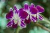 Vietnam (Michael Zahra) Tags: asia asian southeastasia viet vietnam vietnamese travel tourism adventure exotic colour color colorful flowers flower plants flora
