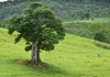Verdejante (Márcia Valle) Tags: brasil minasgerais juizdefora nikon d5100 márciavalle nature natureza green verde verão summertime tropicallandscape brazil