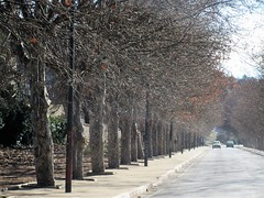 Trees lining the highway, Ifrane, Morocco (Paul McClure DC) Tags: morocco ifraneprovince maroc almaghrib jan2017 ifrane middleatlas scenery