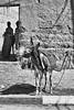 Sonrisa (orozco-fotos) Tags: orozco corozco orozcofotos nikond90 sigma18250mm13563hsm surdemarruecos marruecos southmorocco maroc marokko rissani burro asno donkey esel âne mercado marché market markt